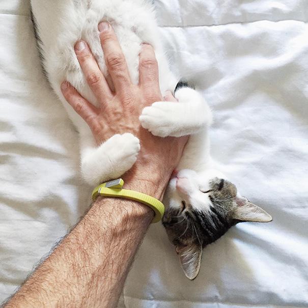 Állatok, akik imádják a símogatást