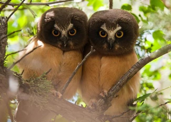 Aranyos állatpárok - testvéri szeretet az állatvilágban