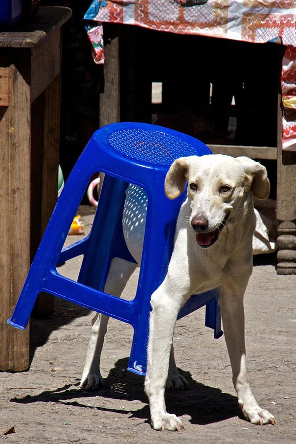 Vicces állatos képek - Állatok a bútorok fogságában