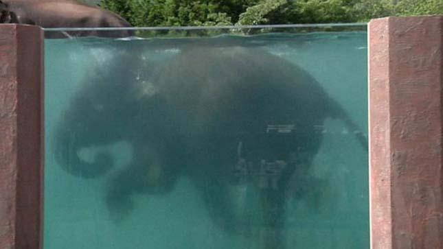 Elefántmedence