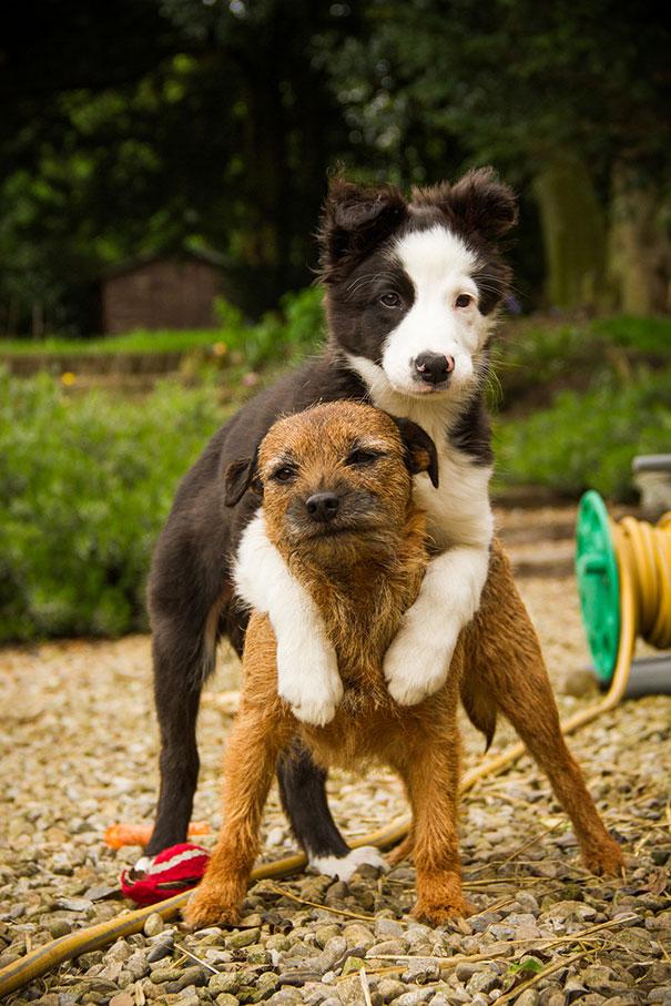 Tündéri kutyafotók