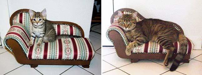 a macskák felcseperedéséről