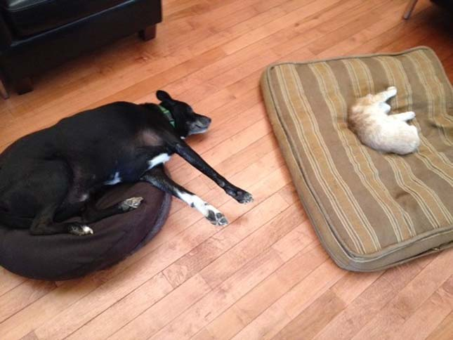 Kutyák, akiket kitúrtak a helyükről