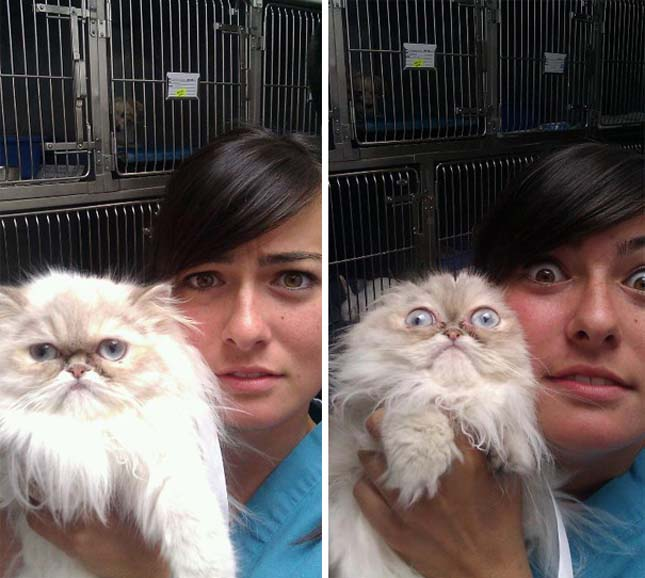 Macskák az állatorvosnál
