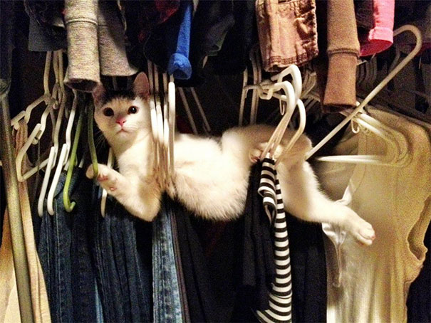 Vicces macskák