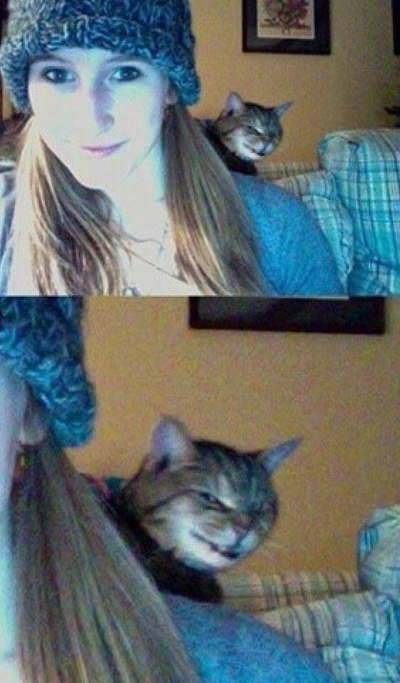 Rosszalkodó macskák