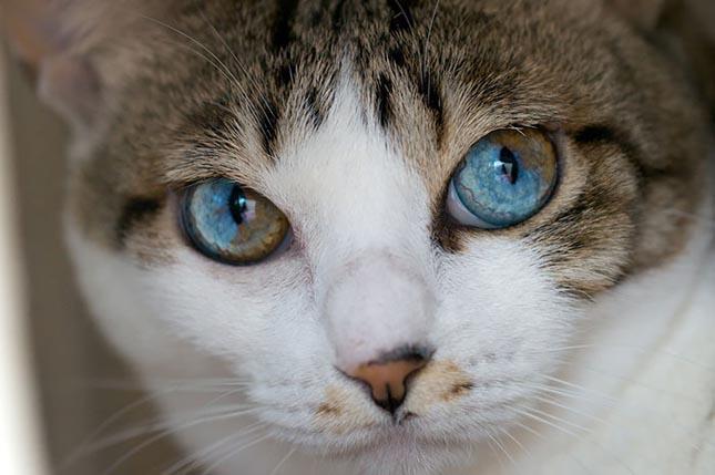 Felemás szemű állatok