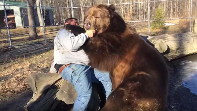 Jimbo medve